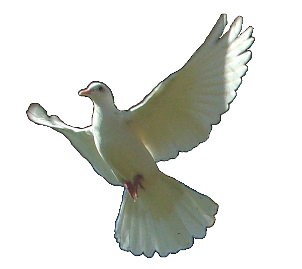 (modified) Dove image by David Campbell